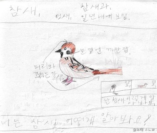 참새 그림. 열두 살 어린이가 날마다 참새를 지켜보고서 손수 그렸습니다.