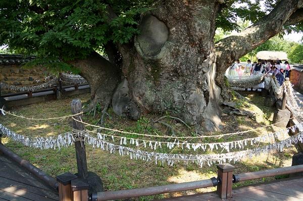 삼신당 느티나무  마을 가운데 돌혈에 심어진 600년 묵은 느티나무로 마을사람들이 성스럽게 여기는 나무다.