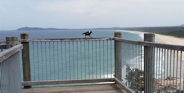모래 백사장이 시원하게 펼쳐진 호주 전형적인 바닷가