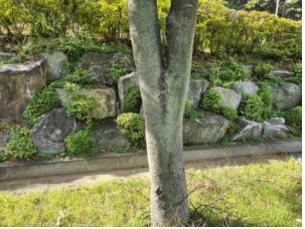 기중 녹조류 서식지 - 나무 수피