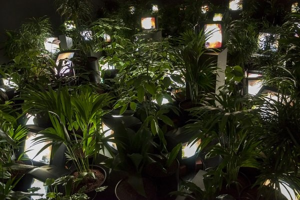 백남준 I 'TV 가든(TV Garden)' 1974-7(2002) Kunstsammlung Nordrhein-Westfalen (Dusseldorf, Germany) ⓒ Estate of Nam June Paik Photo: Tate(Roger Sinek)