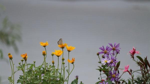야생화와 나비 남들이 불편하다고 한 옥상집에서 생명의 힘찬 기운을 받고 산다.