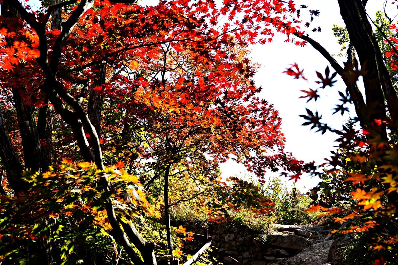 나한봉에서 만난 단풍