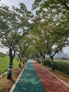 시민들의 뜨개작품이 설치된 화랑유원지 산책로