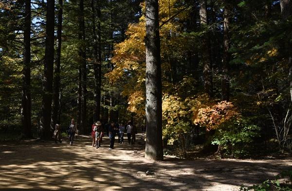 오대산 전나무 숲길
