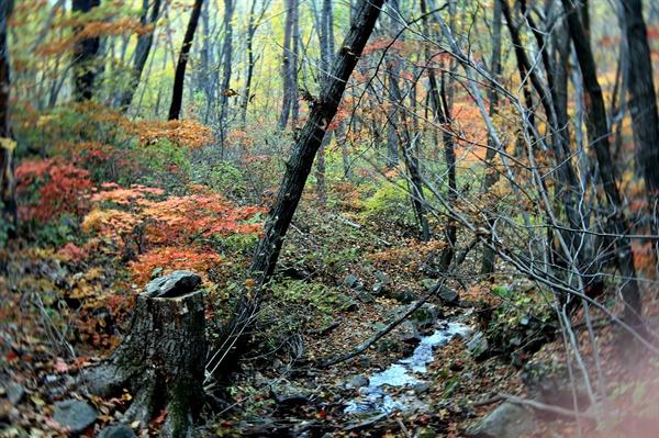 원대리 자작나무 숲 자작나무 숲길에서 하산하는 길에 만난 가을