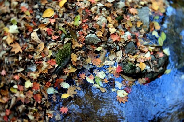 가을 가을이 깊다. 저마다 자기의 길을 당당하게 간다.