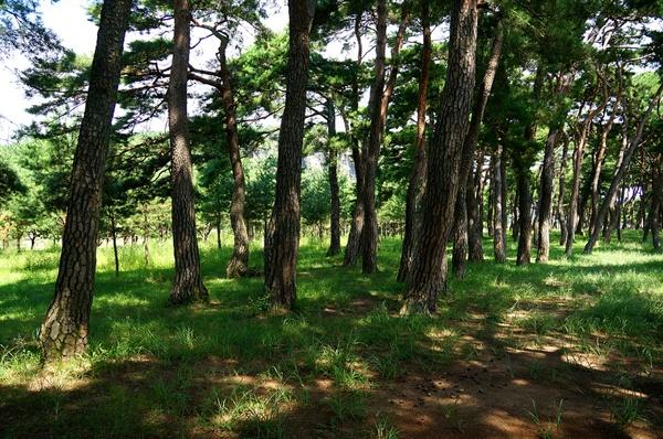 만송숲 아름다운 솔밭으로 류건춘은 만송의 사계를 노래했다. 편안한 시절에는 마을사람들의 쉼터이고 세상이 어지러울 때에는 역사적인 현장이었다.
