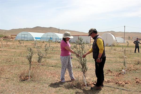 몽골 사막화방지를 위해 서울시에서 지원하는 프로젝트에 유실수인 비타민나무가 자라고 있다. 신기호 신부가 현장매니저와 나무를 점검하고 있는 모습