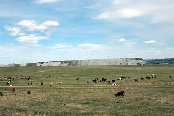 몽골초원에도 개발 바람이 불고있었다. 동물들이 풀뜯고 있는 뒤로 토사가 불쑥 솟아있는 부분은 석탄을 캐는 광산이다.