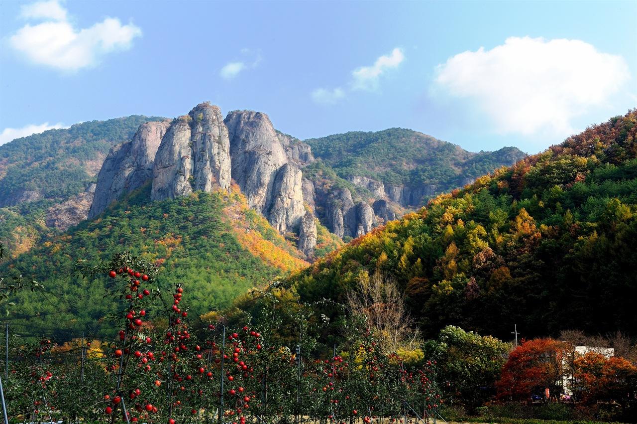 주왕산 아래 사과가 익어가는 청송의 가을 풍광.