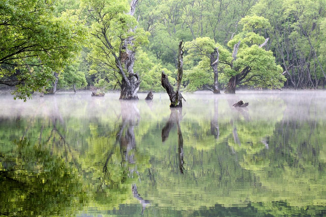 주산지의 투명한 물빛.