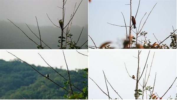 산새들  우리 집 옆 나무에는 산새들이 찾아온다. 왼쪽 위에서 시계방향으로, 청딱따구리, 직박구리, 참새, 박새다.
