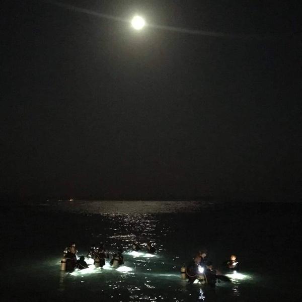 달빛과 함께 하는 나이트 다이빙