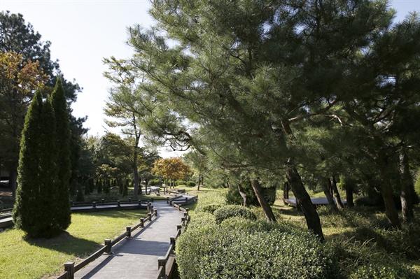 빛가람 치유의 숲의 무장애 나눔숲길. 나무와 나무 사이로 나무널판이 깔려져 있어 휠체어나 유모차도 부담없이 다닐 수 있다.
