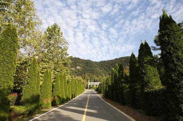 전남산람자원연구소의 명품 도로. 도로 양쪽으로 병정처럼 줄지어 선 나무들이 아름다운 풍경을 그리고 있다.