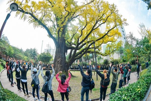 10월 26일 오전 '서울둘레길, 세계인이 걷는다' 페스티벌 참가자들이 수령 600년에 달하는 '방학동 은행나무' 앞에서 만세를 부르고 있다.