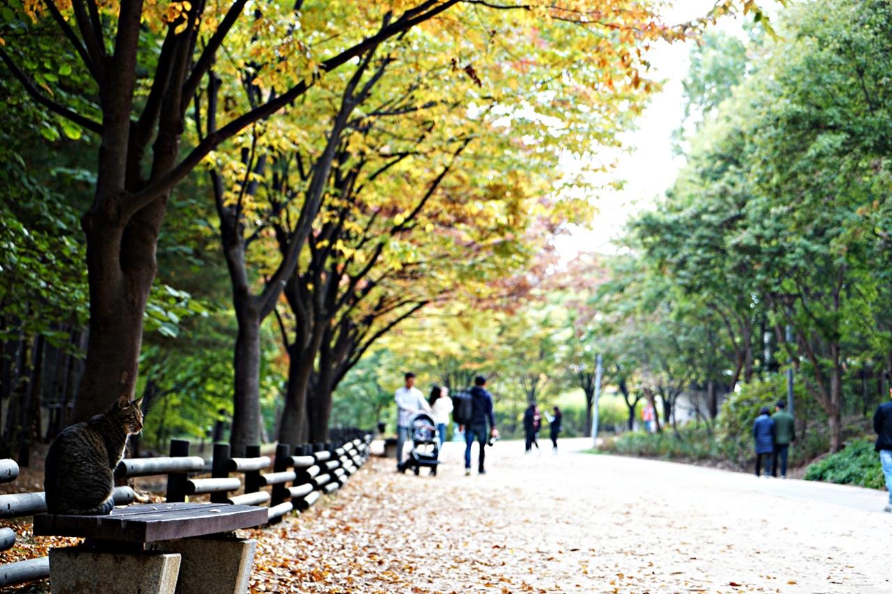 가을이 무르익은 서울숲. 길양이도 나들이 나왔습니다.