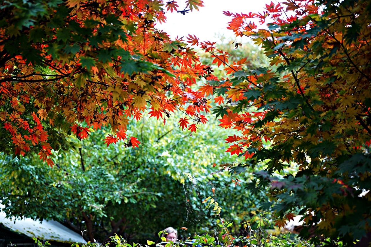 단풍이 곱게물든 서울숲