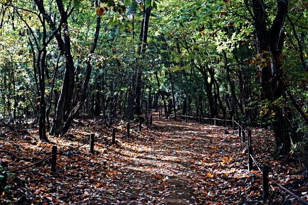 여성봉으로 가는 숲길