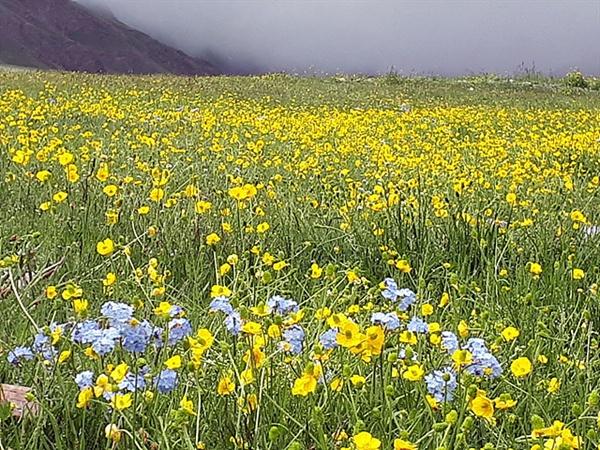 몽골이 황량할 것으로만 생각하면 안된다. 몽골 성산 수타이산으로 가던 도중에 촬영했다. 황량한 사막을 가다가 때론 온갖 꽃이 피는 절경을 만나기도 한다