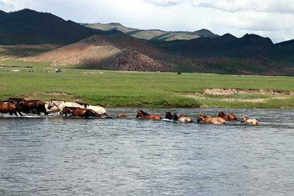 더위를 피해 강물에 들어갔던 말들이 반대쪽 풀밭으로 이동하고 있는 모습