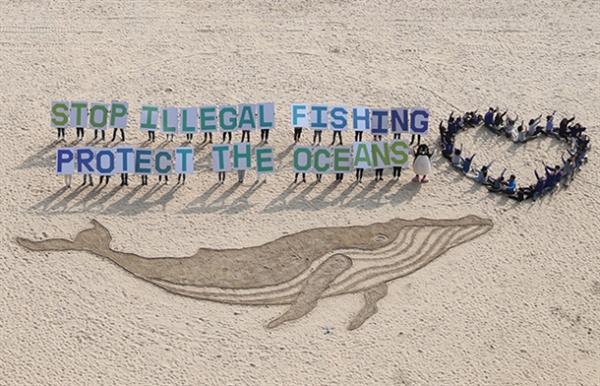 'Stop Illegal Fishing Protect The Oceans (불법 어업 그만, 바다를 보호해 주세요)'