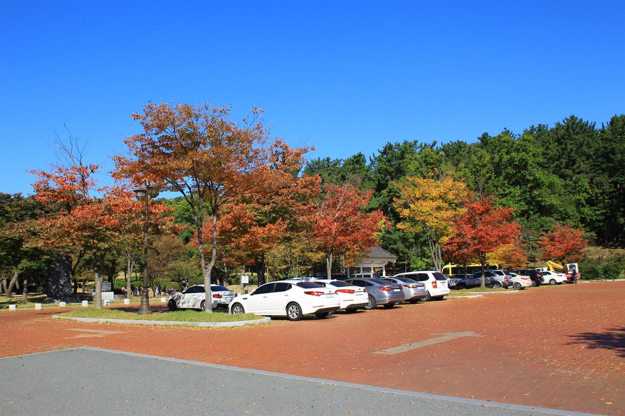 붉게 물든 경주 흥무공원 단풍 모습