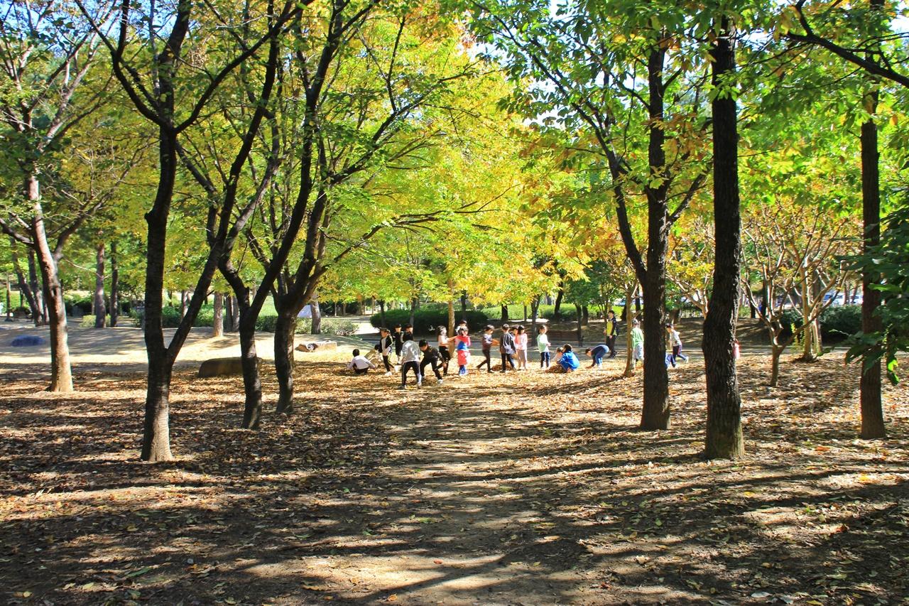 경주 흥무공원 단풍나무 아래에서  즐겁게 뛰노는 초등학교 학생들의 모습