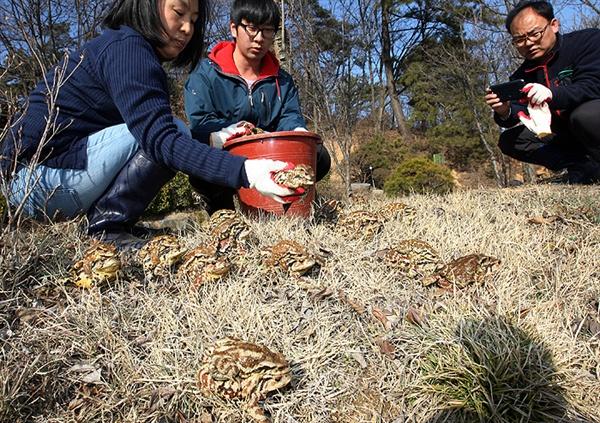 '두꺼비 순찰대' 회원들이 농수로에 빠진 두꺼비들을 담아 옮겨 주고 있다.