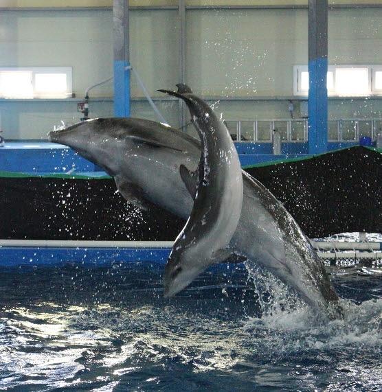 울산 장생포 고래생태체험관의 큰돌고래 장꽃분이 낳은 새끼 돌고래 고장수