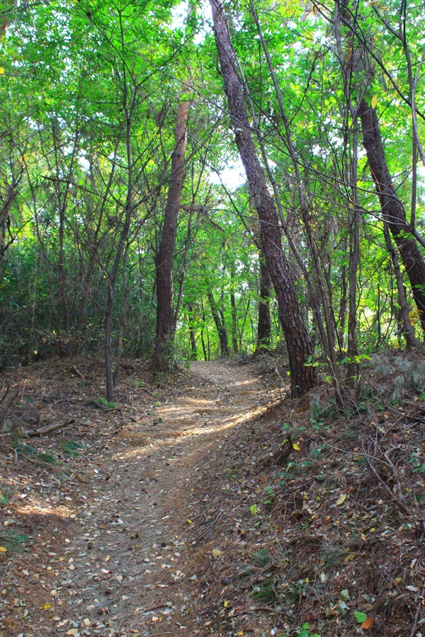경주 삼릉가는 길에 있는 고즈넉한 숲길 모습