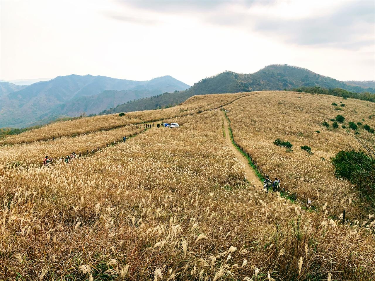 무장산의 억새밭 풍경입니다.  무장봉 정상에 올랐더니 눈에 보이는 모든 곳에 억새밭이 펼쳐져 있습니다. 어딘가 바람이 불어오는 소리도 그대로 들려요.