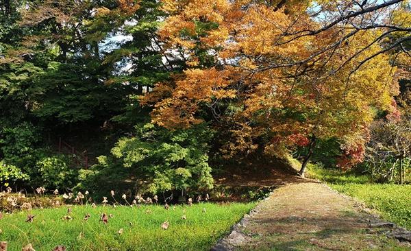 가을로 물든 임대정원림. 임대정으로 오가는 길목의 연못과 어우러져 아름답다.