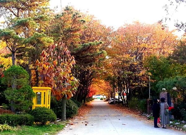 정원길의 가을 빛 빈 터였던 곳에 40년 전부터 나무를 심고 가꾸어온 손길이 있다. 계절이 바뀔 때마다 그 수고에 감사를 드린다.