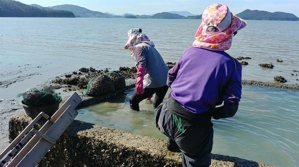 아낙네들이 참꼬막을 캐기 위해 바다로 나갈 채비를 한다.