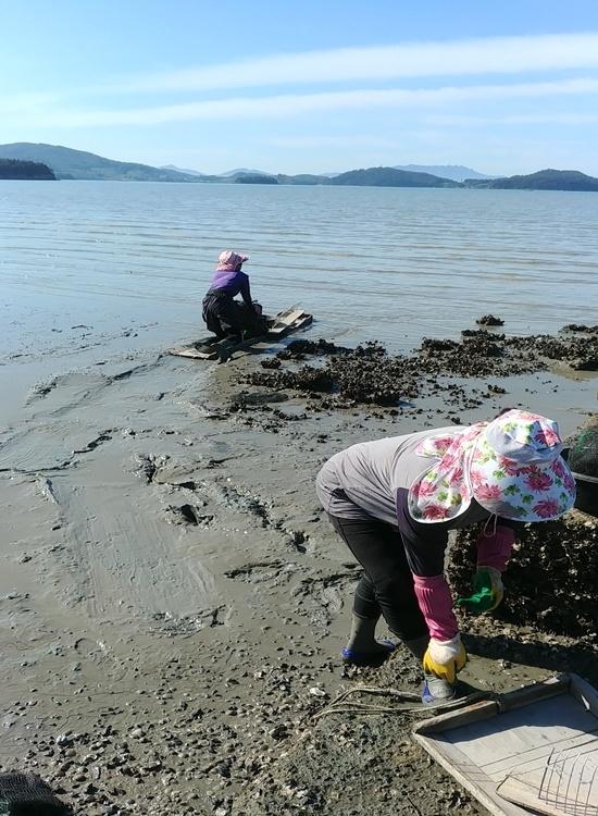 발이 푹푹 빠지는 갯벌에서 뻘배에 몸을 싣고 바다로 나아간다.