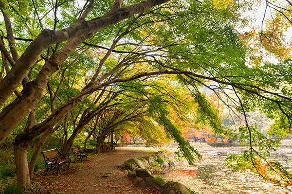 연못을 향해 늘어진 백양사의 단풍나무 백양사는 몇 걸음 차이로 단풍의 첫 시작과 끝을 볼 수 있다