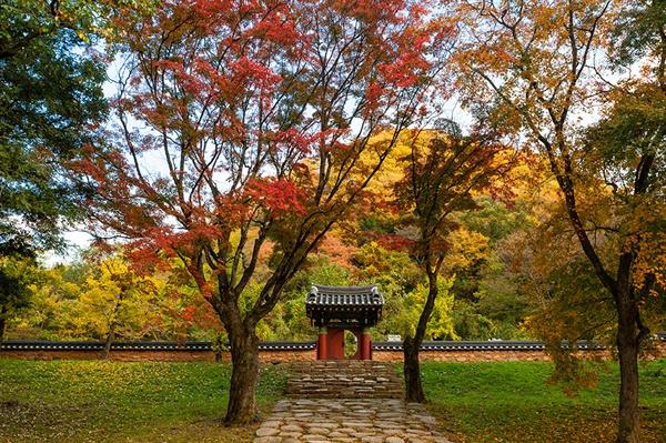 선운사의 가을이 무르익는다 올해 가을은 조금 늦게 와서 아직도 추색을 즐길 수 있다