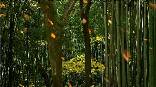 빽빽한 대나무 숲 사이로 난 노란 가을길이 자연스럽게 정원 안쪽으로 안내한다. 댓잎을 스치며 '소쇄 소쇄' 하고 불어오는 맑고 시원한 바람에 귀를 씻는다