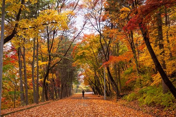 낙엽이 깔린 동물원 둘레길 동물원 둘레길에서 사박사박 낙엽을 밟고 걷는 기분이 좋다