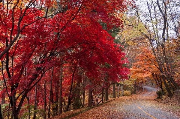 홍엽이 굽이치는 동물원 둘레길 길이 평탄하여 누구나 쉽게 즐기는 서울동물원 둘레길