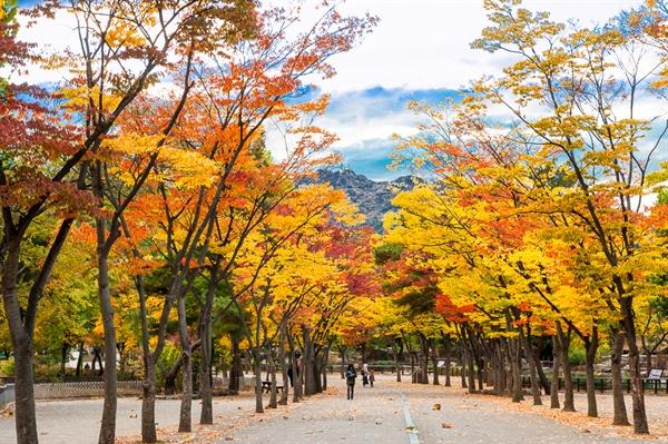 동물원 내부의 산책로 울긋불긋 단풍이 지는 서울동물원 내부의 산책로