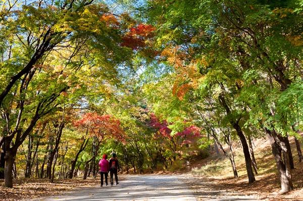 동물원 내부의 포토제닉 포인트 10월에 찾은 과천 서울동물원의 단풍 터널