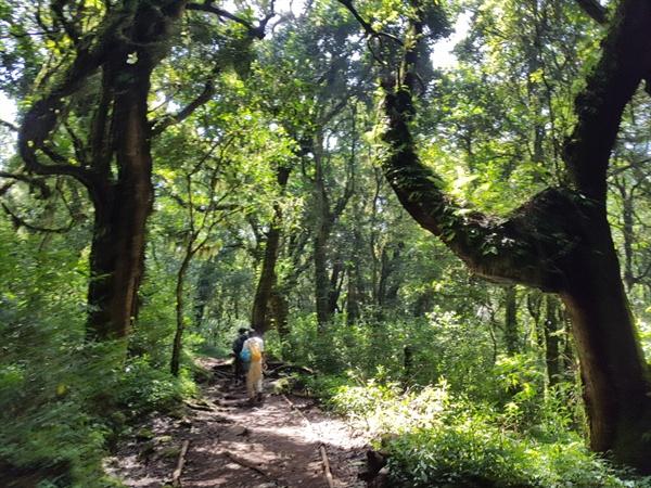 킬리만자로 산림지대인 몬타네 숲의 모습 영화 <아바타>, <쥬라기 공원>에서나 볼 수 있었던 울창한 산림지대의 숲을 실제로 접하게 되니 입이 쩍 벌어졌다.