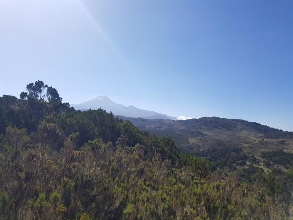 해발 3000m를 올라가서 접하게 된 킬리만자로산 중턱 고산식물지대의 모습 멀리 정상의 만년설이 아름다운 풍채를 드러내고 있다.