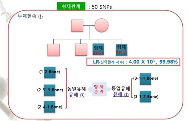 아산 염치읍 대동리(새지기) 지역에서 발굴된 유해에 대한 유전자감식결과 희생자 두사람은 형제 관계인 것으로 나타났다.