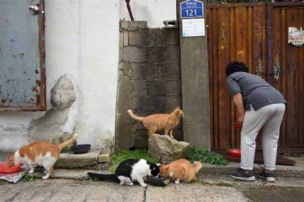 권애자(72세) 할머니가 고양이에게 밥을 주고 있다. 오랜 시간을 함께해온 듯 친근해 보였다.