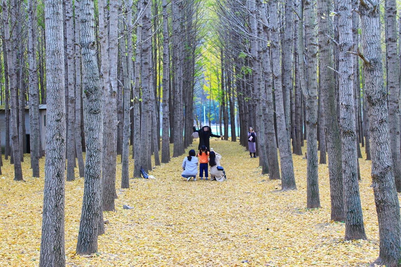 경주 도리마을 은행나무숲 베스트 샷 명소