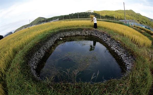국가중요농업유산으로 지정된 '고성 둠벙'.